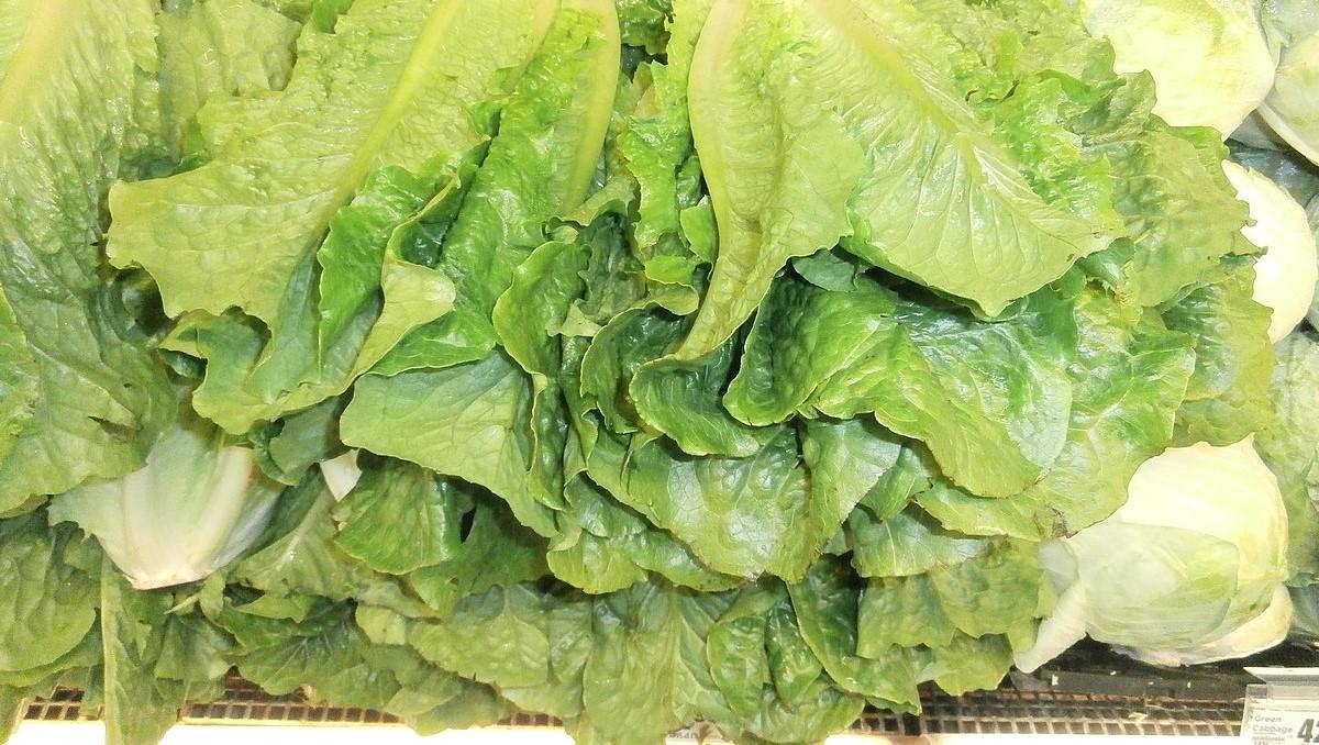 Stack of Romaine lettuce