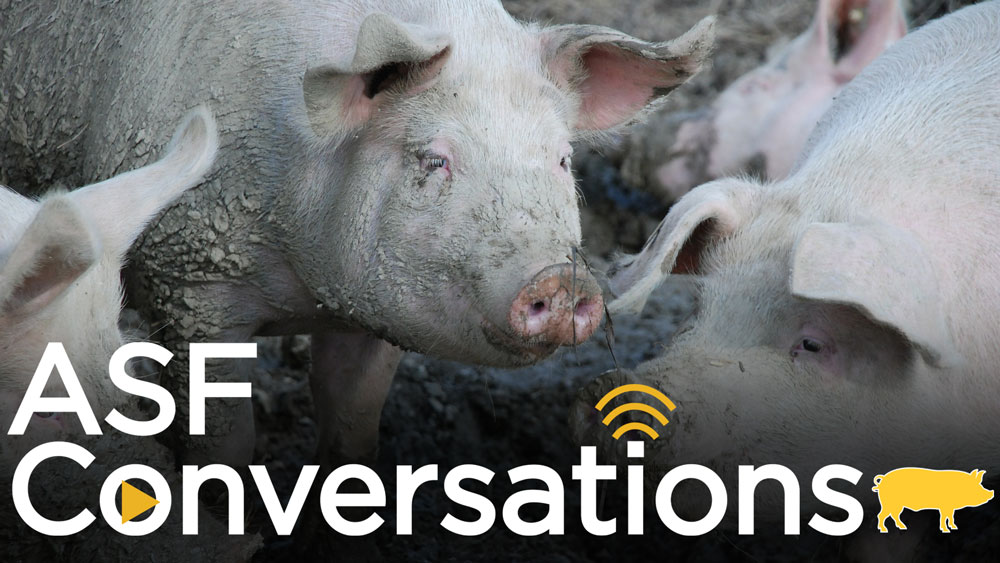 A group of pigs with the ASFConversations logo overlayed