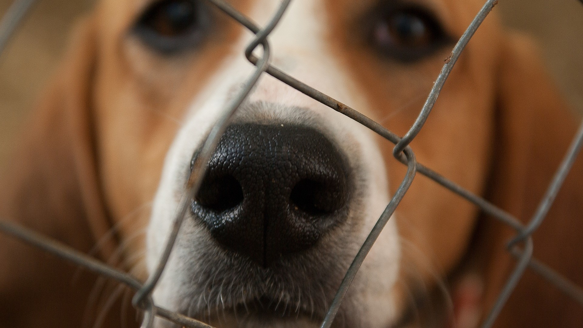 Close up of dog in kennel.
