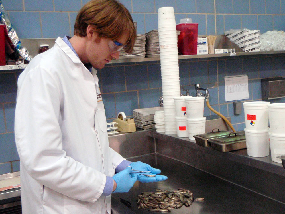 Nick Phelps working with fish in a lab